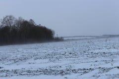 冬天风和雪 免版税库存照片