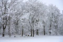 冬天风景、积雪的树和一条长凳以放松的桌在雪下在森林里 库存图片