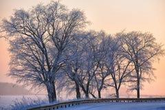 冬天风景、路和树 免版税库存照片