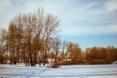 冬天风景、雪、天空和树 免版税图库摄影
