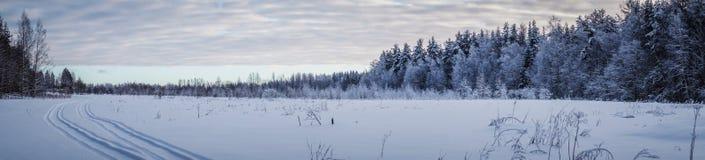 冬天风景全景 免版税库存图片