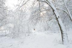 冬天风景公园 免版税图库摄影