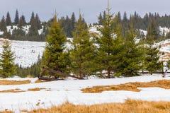 冬天风景和杉树 免版税库存照片