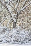 冬天风景在一个积雪的公园 免版税库存图片