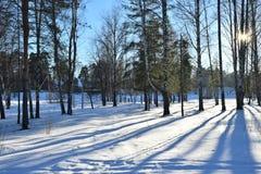冬天风景在一个晴天在河的桦树树丛里 免版税图库摄影