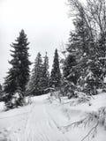 冬天风景在具球果森林放弃了老木房子,在一个多雪的草甸的林务员` s小屋喀尔巴阡山脉的mou的 免版税图库摄影