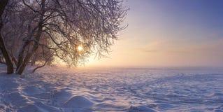 冬天风景在日落的晚上 雪,霜在1月 容易的背景编辑图象本质导航冬天 结构树在阳光下 免版税图库摄影