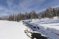 冬天风景在有多雪的树和小河的瑞士 免版税库存图片