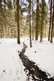 冬天风景在有用白色盖的树的森林里 免版税图库摄影