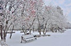冬天风景在有长凳的城市公园在花楸浆果tr下 免版税库存照片