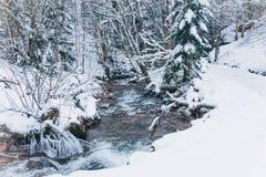冬天风景在森林里 库存照片