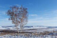 冬天风景在西伯利亚 库存照片