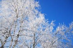 冬天风景在霜的白桦分支在蓝天背景  图库摄影