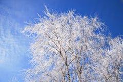 冬天风景在霜的白桦分支在蓝天背景  免版税库存照片