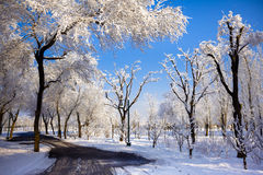 冬天风景有积雪的树的一条路。 免版税库存照片