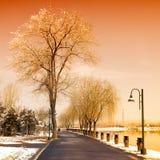 冬天风景有积雪的树的一条路 免版税库存照片