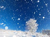 冬天风景有蓝天、领域和一棵树的全景 库存照片