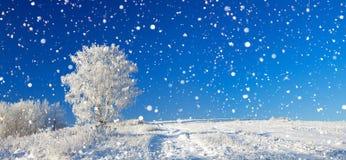 冬天风景有蓝天、领域和o的全景 免版税图库摄影