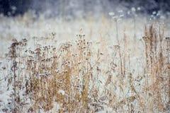 冬天风景树和干草在森林用霜报道了在领域附近设置的美好的光 免版税库存图片