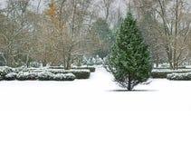 冬天风景树 免版税库存照片