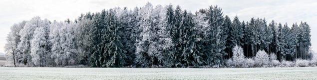 冬天风景的全景图象与焦点的在森林 免版税库存图片