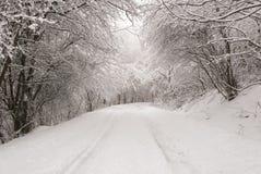 冬天风景的森林 免版税图库摄影