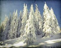 冬天风景葡萄酒照片与多雪的冷杉木的 库存图片