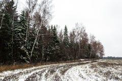 冬天风景,下雪混杂的森林 免版税库存照片