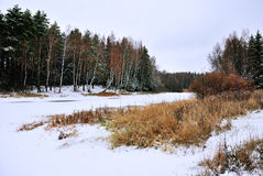 冬天风景,下雪混杂的森林 免版税图库摄影