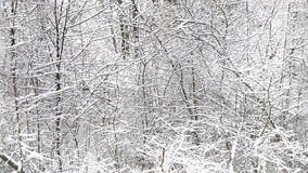 冬天风景,与雪,水平的无缝的textur的分支 库存图片