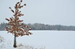 冬天风景,南波希米亚看法  库存照片