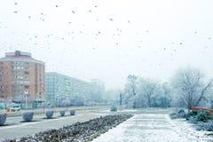 冬天风景,在天空的鸟在城市上 免版税库存照片