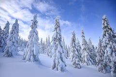 冬天风景,在山的积雪的树 Karkonosze,波兰 免版税图库摄影