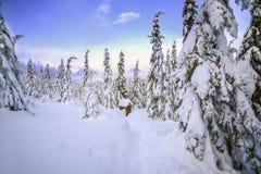冬天风景,在山的积雪的树 Karkonosze,波兰 免版税库存照片