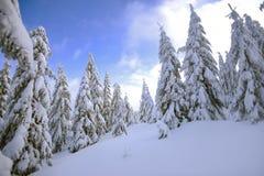 冬天风景,在山的积雪的树 Karkonosze,波兰 图库摄影