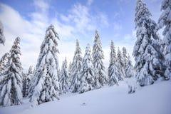 冬天风景,在山的积雪的树 Karkonosze,波兰 库存图片