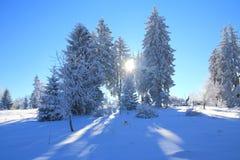 冬天风景,太阳通过用雪盖的杉树发出光线 库存照片