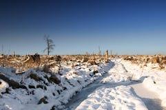 冬天风景,意外收获 免版税库存照片