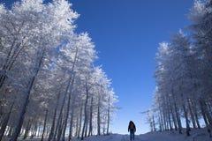 冬天风景,旅行家步行在雪森林 库存图片