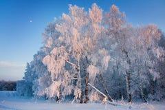 冬天风景,桦树,霜,雪 免版税库存照片