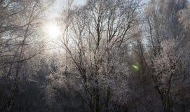 冬天风景,特写镜头 图库摄影