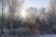 冬天风景,特写镜头 库存照片