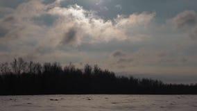 冬天风景,白色积雪的领域 股票视频