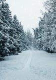 冬天风景,神仙的森林 免版税库存照片