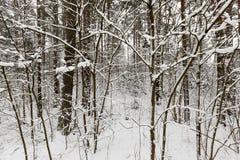 冬天风景,降雪 免版税图库摄影