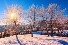 冬天风景,霜 免版税库存照片