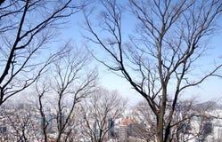 冬天风景,韩国 库存图片