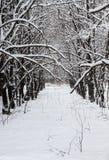 冬天风景, 12月在森林里 免版税库存照片