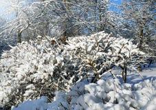冬天风景, 12月 免版税库存图片