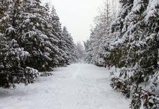 冬天风景, 12月 库存图片